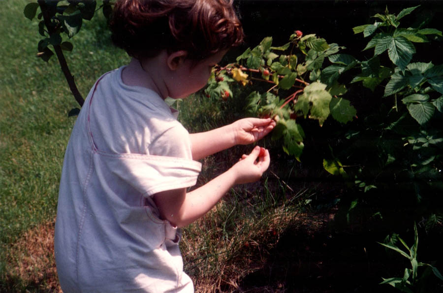 Solomon (age 3) picking fruit